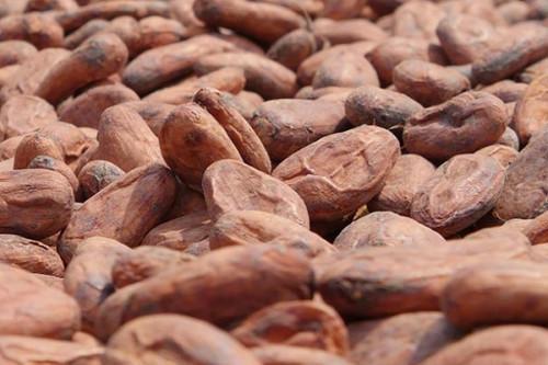 Cacao: le prix minimum du kilogramme de la fève au Cameroun repasse au-dessus de la barre de 1000 FCFA